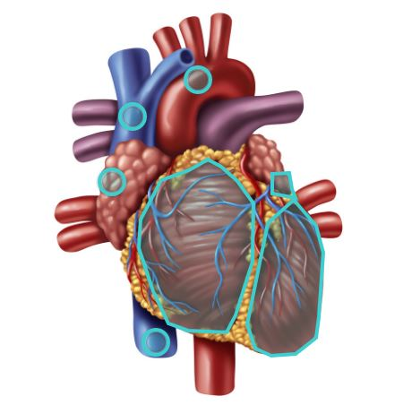 Quizlet new hotspot style quiz for visual learners edtech heart diagram ccuart