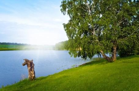 CREDIT Summer Landscape by Larisa Koshkina
