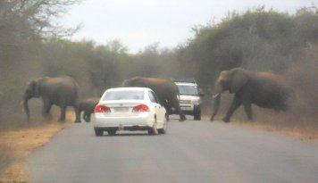 Kruger 6 ago 36