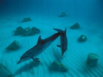 """""""Dolphins"""" Study of realy photography and 3D integration"""