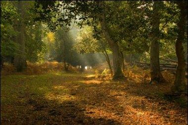 Un bosque tranquilo