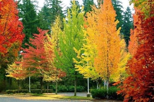 arbres de colors