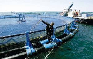 La hora de la acuicultura en el planeta