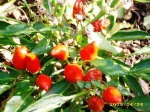 huerta del botanico (6)