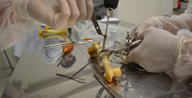 Medicina Veterinaria Y Zootecnia Carrera Profesional Con Futuro