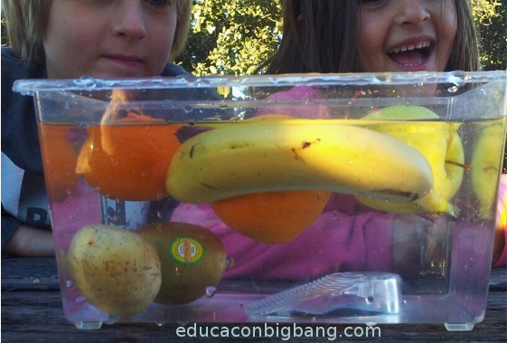 Frutas y hortalizas en el agua