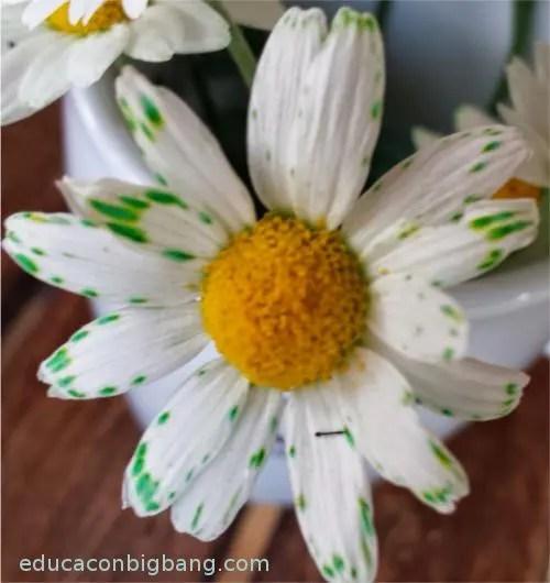 Flor coloreada