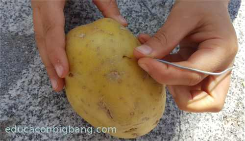 colocando el cable de cobre en la patata