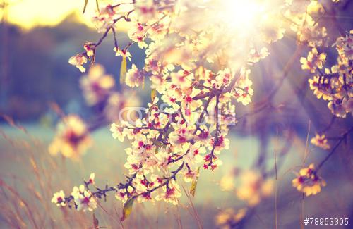 I fiori sbocciano perché devono