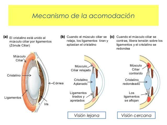Desenfoque | en Educando tu mirada | Centro de optometría y terapia visual en Valencia