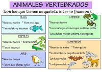 dibujos animales vertebrados