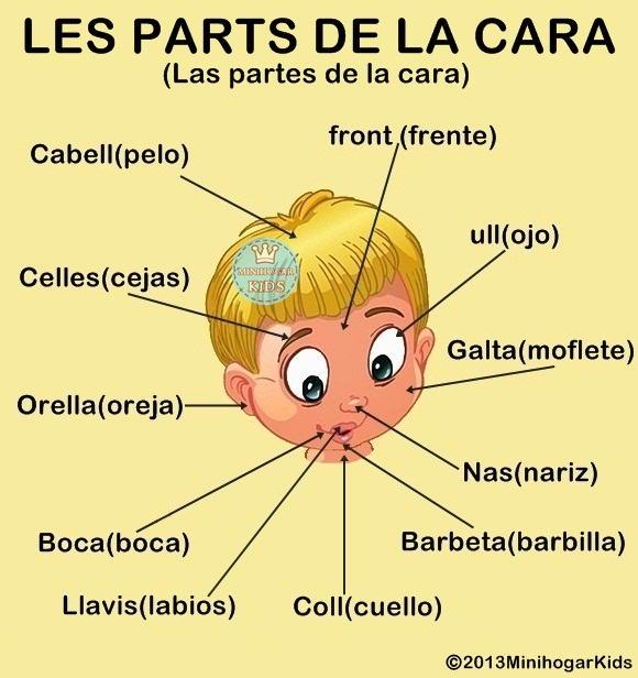 Partes de la Cabeza y Cara en Espaol e Ingles y su pronunciacin