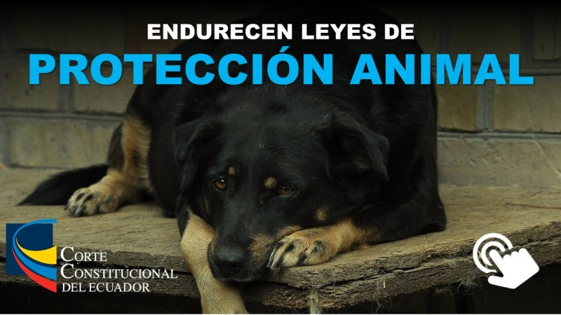 Endurecen Leyes de Protección Animal