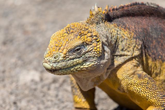 flora y fauna de la costa ecuatoriana  importancia de la flora y fauna del ecuador