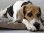 mi cachorro llora mucho