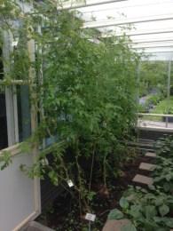 De Kas has its own indoor garden