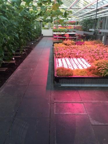 Heat lamps encourage leaf growth
