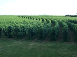 Elegance and symmetry in the vineyards