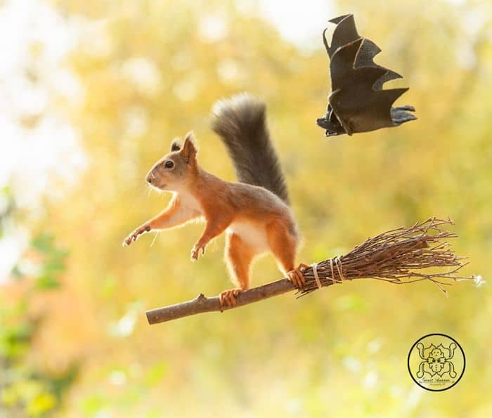 A squirrel flying on a broom with a bat following