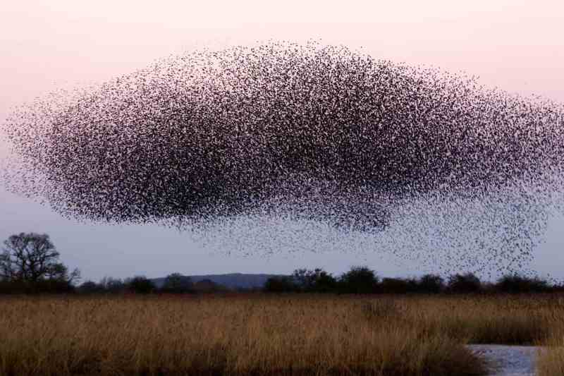 Insect Flock