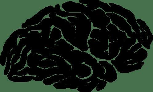 脳の大きさとIQの関係性