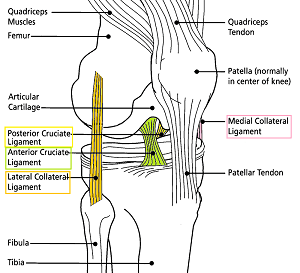 What Are Ligaments? - Definition, Types & Quiz | Study.com