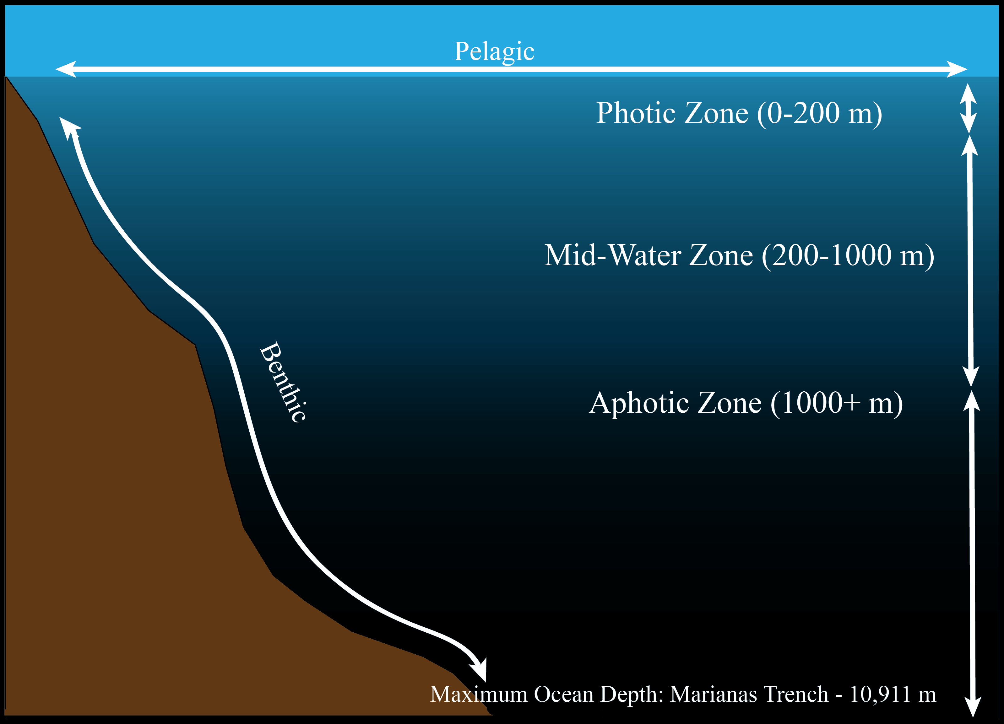 Oceans Facts Amp Information