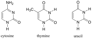 Why are thymine and cytosine called pyrimidines?  Quora