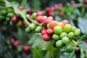 1507coffee