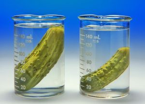 Image of cucumbers being used for an osmosis experiment