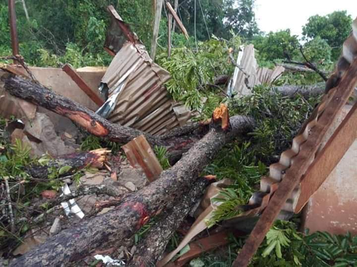 JUST IN: 35-year-old teacher killed by falling tree at Denkyira Motiakrom 1