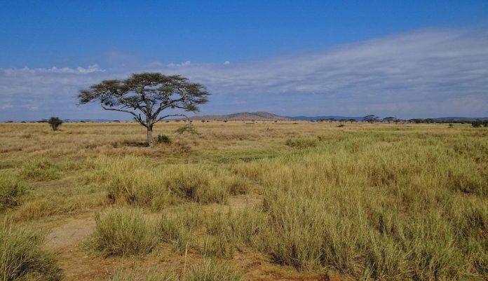 steppies grass land
