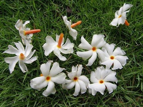 b6bc9-floweri