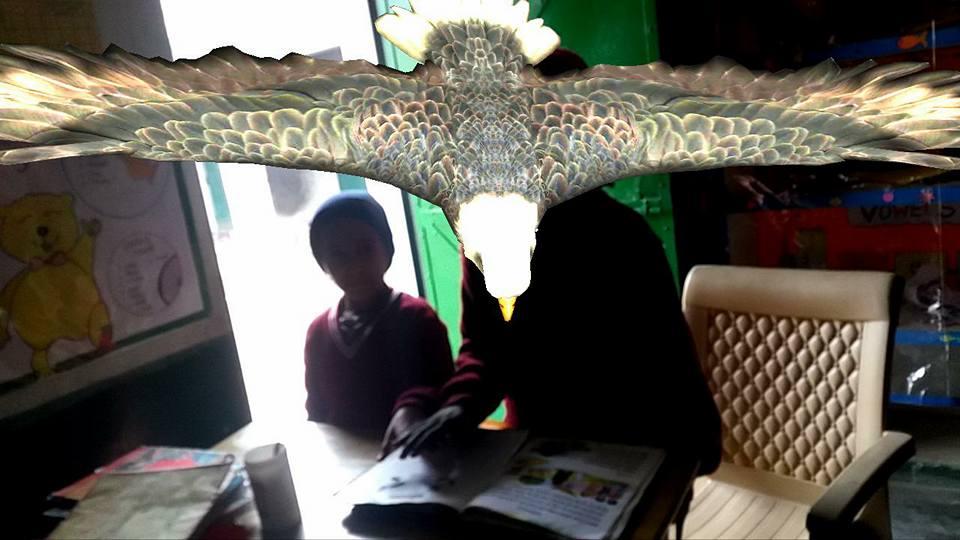 animals-in-classroom-4