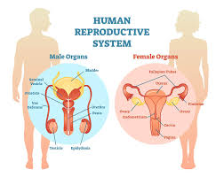 Biology english notes female reproductive system brain origin of life