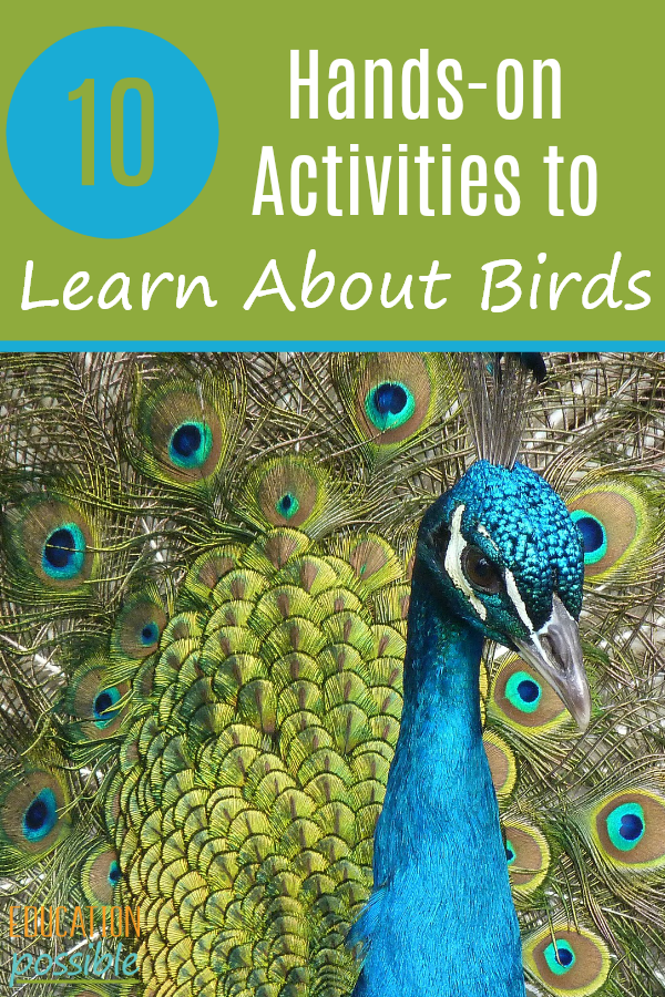 If you're learning about birds or flying creatures, add some of these hands-on activities to your science lesson plans. There's also ideas for using birds as inspiration for your art lessons. They're a great way to engage your middle school students because they'll be having so much fun completing these hands-on projects. Homeschoolers can even have fun birding in their own back yards. #birding #science #scienceproject #middleschool #tweens #teens #homeschooling #educationpossible