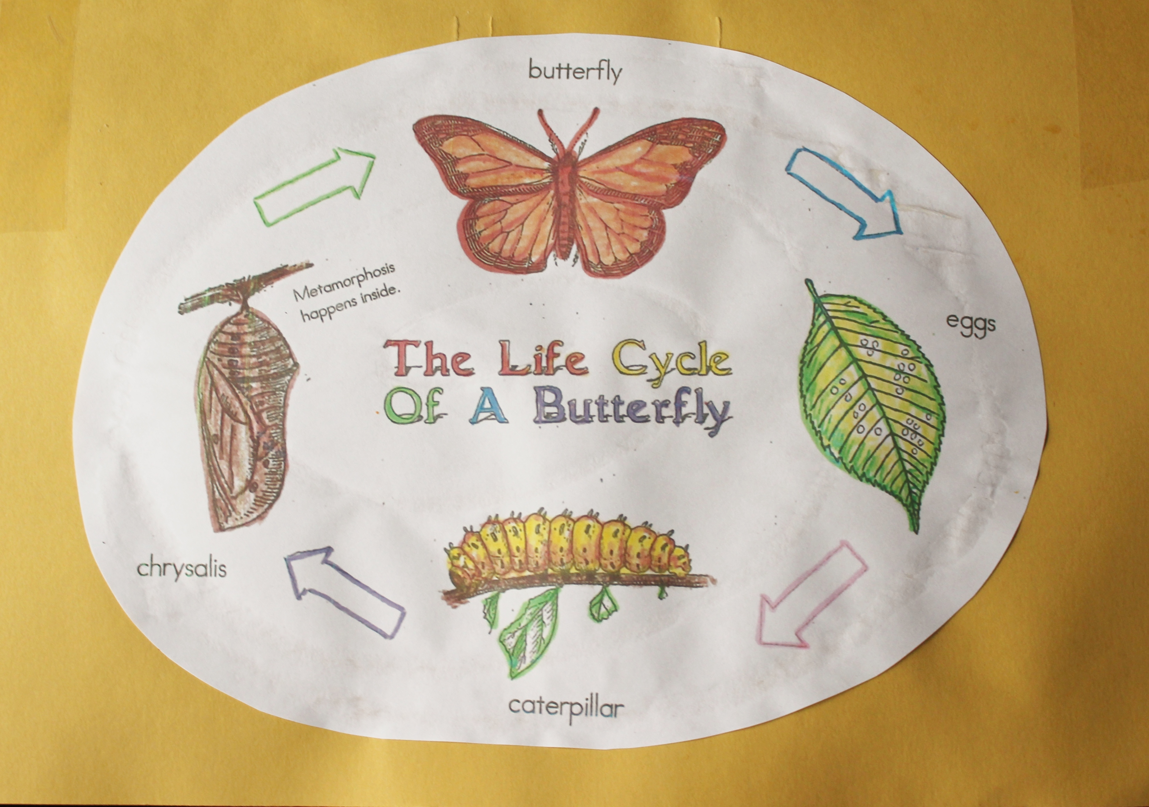 Our Finished Butterfly Project Education Unfettered