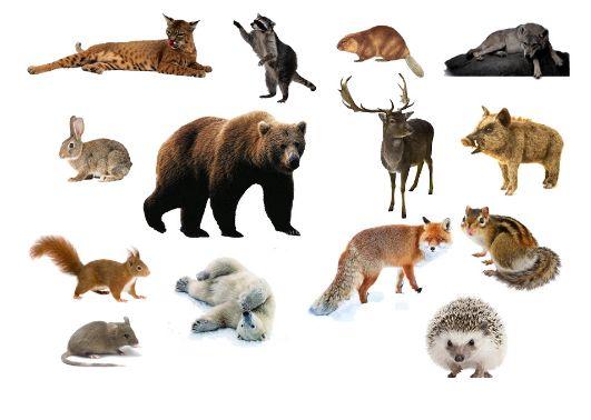 Конспект уроку Рзномантнсть тварин Дик домашн