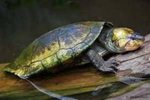 9 children, 10 others die in Madagascar after eating turtle