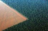 Reading Skills Comprehension: Forests