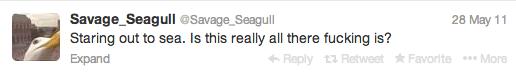 savage seagull