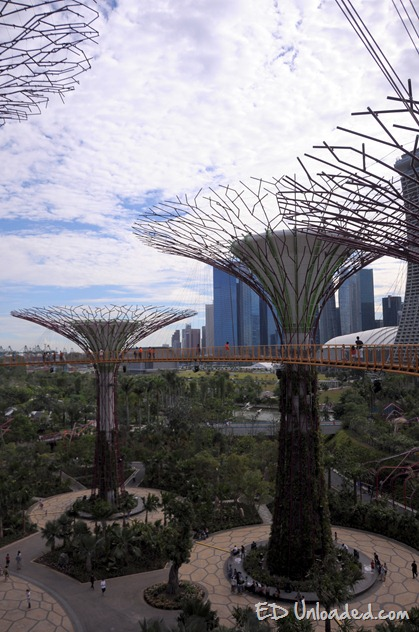 supertrees at the gardens