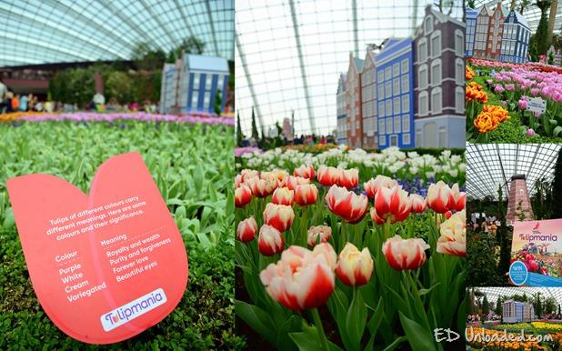 tulip collage