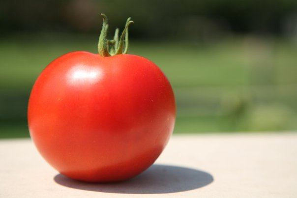 the first tomato of the season (2008)