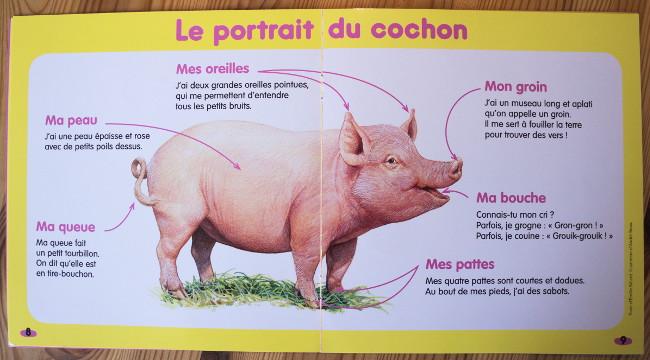 Magazine nature - Kolala - Animal