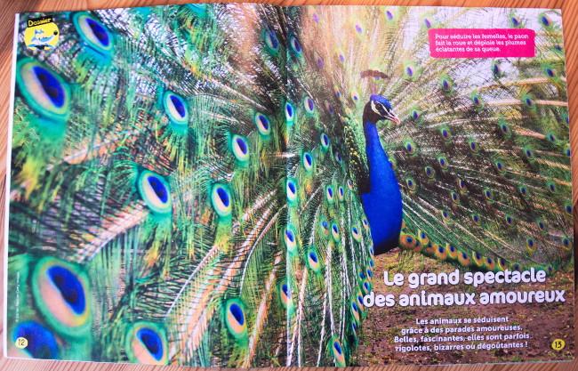 Magazine nature - Wakou - Dossier