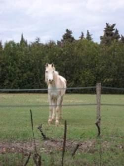 Tout le monde se souvient de sa première rencontre avec le cheval...