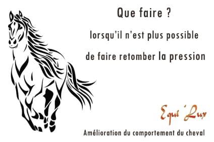 Le bien-être par les couleurs pour le cheval et le cavalier