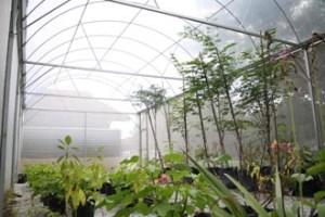 Nilai University's Biotechnology Green House