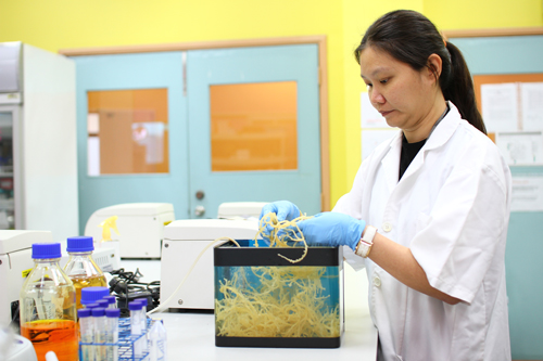 Best University in Malaysia for Aquatic Marine Science Degree at Top Ranked UCSI University